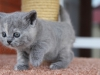 kitty-rina-1