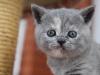 kitty-rina-10