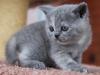 kitty-rina-11