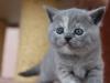 kitty-rina-12