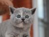 kitty-rina-13