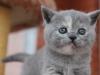 kitty-rina-14