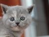 kitty-rina-15
