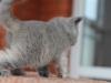kitty-rina-16