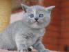 kitty-rina-17