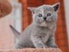 kitty-rina-18