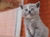 kitty-rina-19