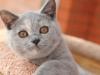 kitty-rina-1_0