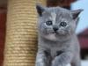 kitty-rina-2