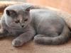 kitty-rina-2_0