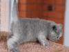 kitty-rina-3
