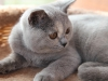kitty-rina-3_0