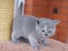 kitty-rina-4