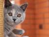 kitty-rina-4_0