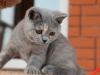 kitty-rina-5_0