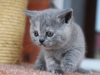 kitty-rina-6