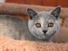 kitty-rina-6_0