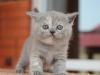 kitty-rina-7