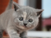 kitty-rina-8