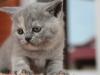 kitty-rina-9