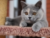 kitty-rina-of-kotoffski-12