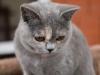 kitty-rina-of-kotoffski-1_0