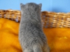 kitty-rina-of-kotoffski-4