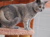 kitty-rina-of-kotoffski-6