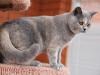 kitty-rina-of-kotoffski-7