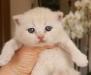 girl_lisel_pink2_090410